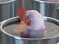 FSIS - Do Not Wash Poultry