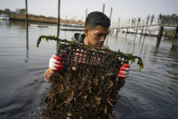Regenerating New York Harbor, One Billion Oysters at a Time