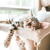 Your Cat Has an Adorable Reason For Purring in Their Sleep - They're Dreaming!