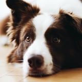 Wondering Why Your Dog Shakes So Much? It's More Complex Than You'd Think