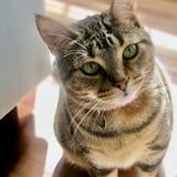 """I Adopted a Traumatized """"Street Cat,"""" and She's Made My Life Infinitely Better"""