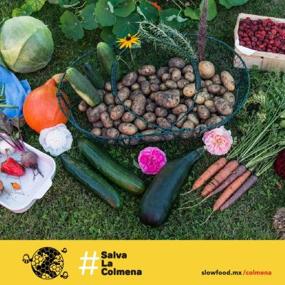 SaveTheHive - Join the Bee Rescue Team with Slow Food Mexico