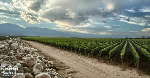 VinePair Podcast: Diving Into Argentina's Uco Valley With Zuccardi Wines