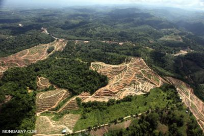 Child labor on Indonesian palm oil plantations