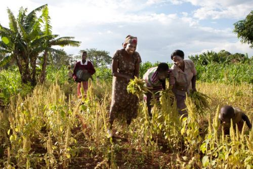 US Groups Invest Billions in Industrial Ag in Africa. Experts Say It's not Ending Hunger or Helping Farmers