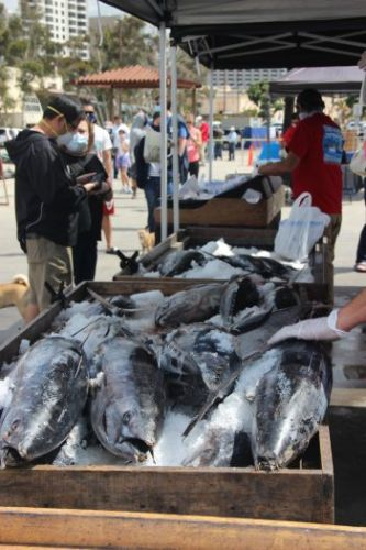 A San Diego Pier-to-Plate Seafood Market Is a Lifeline for Fishermen