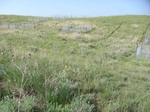 Excess Fertilizer Causes a New Challenge: Low Crop Yields DuringDrought
