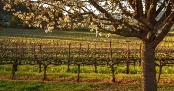 Wine 101: The U.S. Regions Outside of California You Need To Know