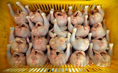 Chinese poultry isn't safe, Rep. DeLauro tells Secretary Perdue
