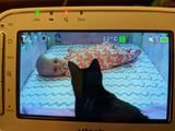 This Mom's Cats Became Best Friends Forever With Her Newborn Daughter and I'm Squealing