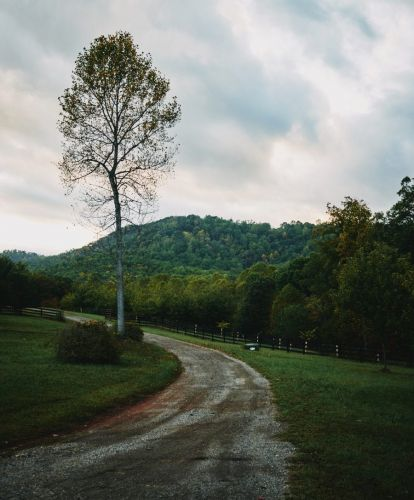 The Long and Winding Road: A Tale of the American Chestnut