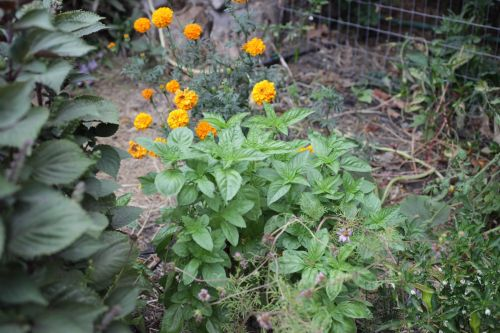 October Garden Notes: Seeds and Stars and Secrets