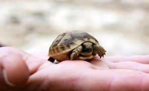 Turtle trouble: outbreak case count climbs to 76
