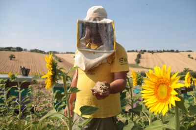 Hunger4Bees: Declining Bee Populations Mean and Our Food
