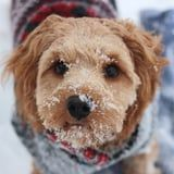 Here's How To Tell If Your Dog is Cold