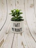 "Etsy Is Selling Hilarious Succulent Planters, and We Call Dibs on the ""I Wet My Plants"" One"