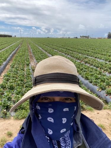 Farmworkers are risking their lives to feed a nation on lockdown
