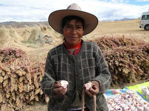Globally Important Agricultural Heritage Systems: a FAO project with Slow elements
