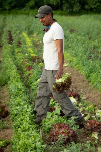 A Farmer-Owned Local Food App Stands Out from the Venture Capital-BackedCrowd
