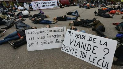 Cameras to be introduced in French slaughterhouses