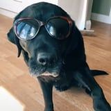 People Are Using Treats to Get Dogs to Dance in Sunglasses, and I Could Watch These All Day