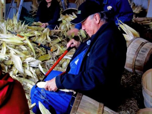 An Indigenous Corn Makes a Comeback
