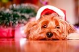 7 Expert-Approved Tips to Capture the Perfect Holiday Photos of Your Beloved Pets