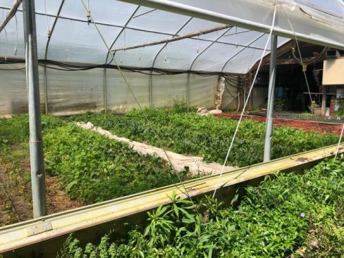 A Maryland Grain Grower Takes Regenerative Agriculture to the Next Step