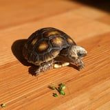How to Know If Your Tortoise Is Sick, According to 2 Veterinarians