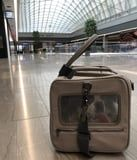 Maxbone Makes Everything My Dog Needs to Travel, Starting With This Stunning Carrier