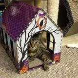 Run - Don't Walk -'Cause Aldi's Selling Halloween Cat Houses For Just $8