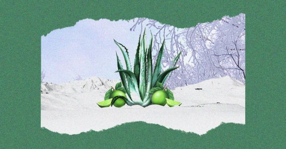 8 of the Best Tequila Cocktails for Winter