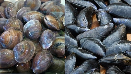 How to clean and prepare mussels and clams