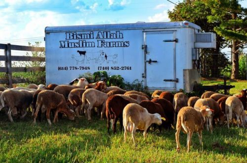 Sustainable Halal Meat is Making Inroads in Muslim Communities
