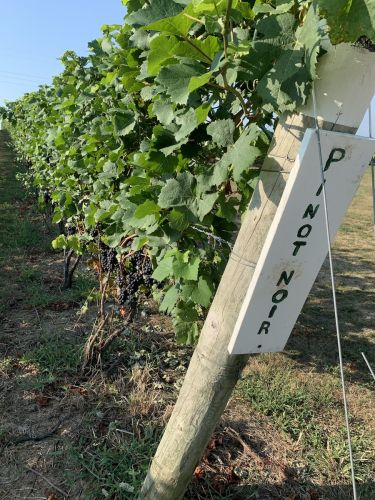 Cheers? Rising temperatures could make Michigan the next great wine hub
