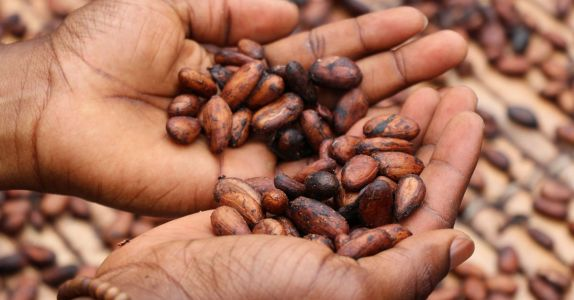 Ask Adam: What's the Difference Between Cocoa and Cacao?