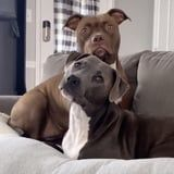 I Can't Stop Laughing at These 2 Dogs Reacting to Their Owner Saying Their Favorite Words