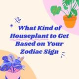 Find Out Which Houseplant You Should Get Based on Your Zodiac Sign