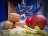 A Man Turned All of the Photos He Has of His Cat Staring at His Food Into a Calendar
