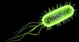 A Salmonella, Hepatitis A and E. coli weekend